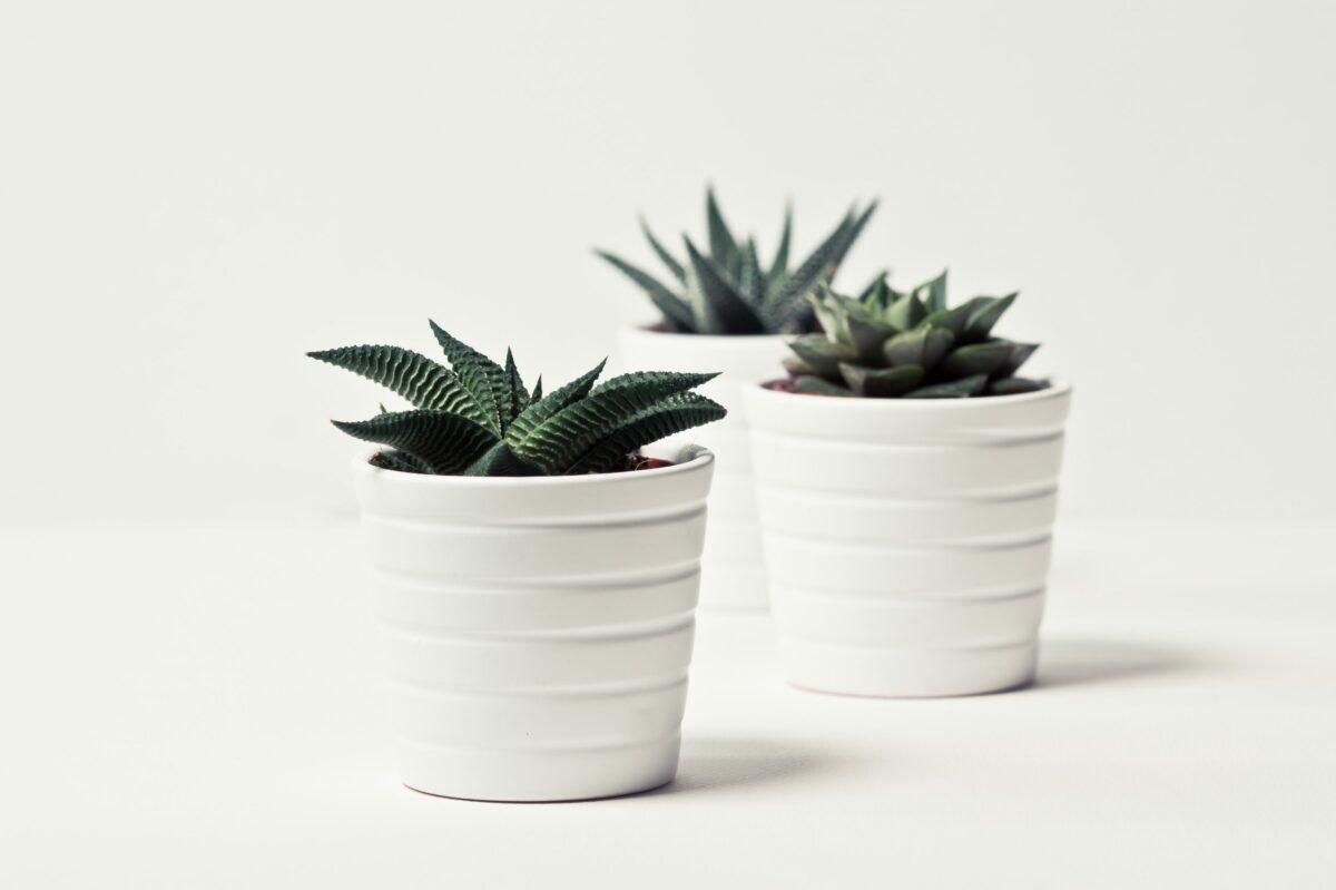 apartment friendly house plants